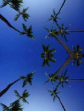 Hintergrund Palmtrees