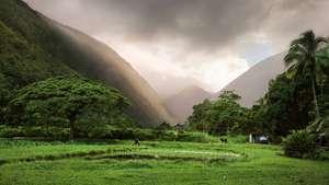Mythos Hawaii – Eine Reise für Triathlonfans und Erlebnisurlauber