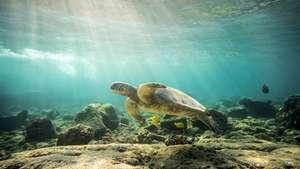 Konas Unterwasserwelt